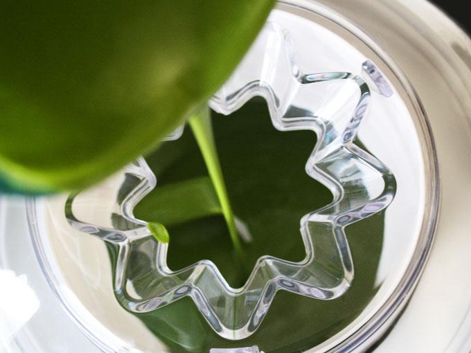 raw vegan matcha green tea ice cream